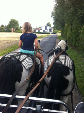 Holzrücken mit Pferd