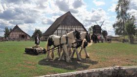 Holzrücken mit Pferden; Waldarbeit mit Pferden in Mecklenburg-Vorpommern; Kutschfahrten in MV