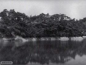 昭和30年代の白旗池ほとんど松林(枚方・交野100年史より)