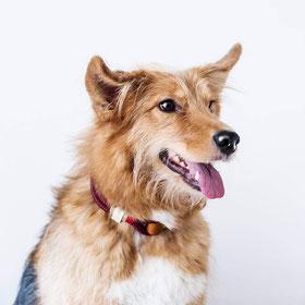 Hochwertige Halsbänder Hund