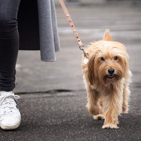 Hundeleine online kaufen