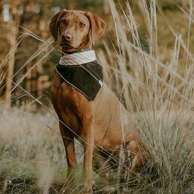 hundsoadli Hundehalstücher online kaufen