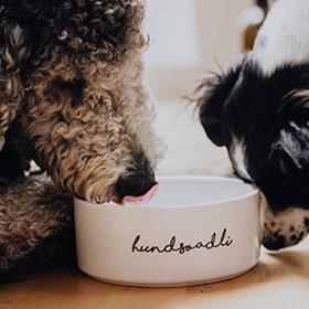 schönen Hundenapf online kaufen