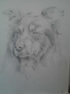 Sunny. Bleistift. 2012