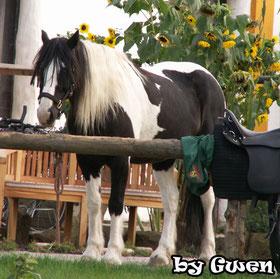 Copyright by Gwen von www.die-haltergemeinschaft.de