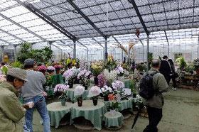1000平方メートルの花世界