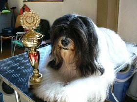 BOB Coburg 2014  Tibet Terrier Ti La Shu Xclusive Lamleh
