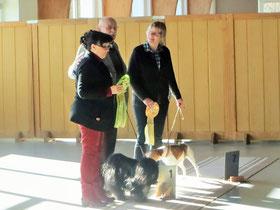 BOB Tibet Terrier und BIS 1  Steinhausen 2015
