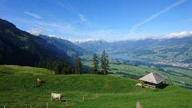 Berge Wandern See Natur Obwalden Arvi Sarnersee