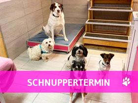 Hundehort Rudel-Treff - Schnuppertermin anmelden