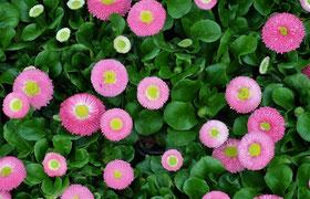Blumen Fruhjahr Euro Blumen Und Gemuse