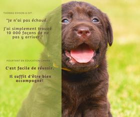 Animheureux- éducation canine bienveillante
