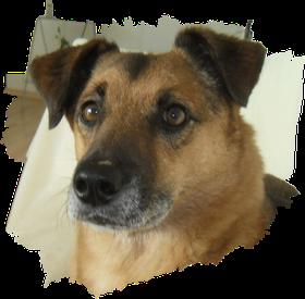 Hund - Profilbild