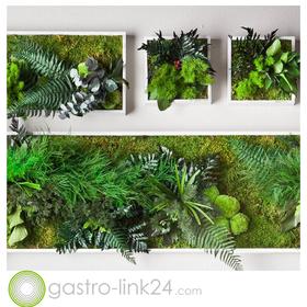 Style Green Wandbilder