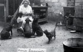 Les animaux - Coll Ch. Bosquain
