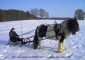Pferdeschlitten im Mecklenburg Vorpommern