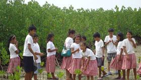 マングローブの植林・保全は、学校の大切な活動として先輩から後輩に受け継がれている