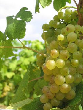 accueil vignoble en chambres d'hotes à Narbonne, Aude
