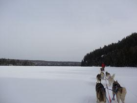 Hundeschlitten Tour: Huskies auf einem See in Ontario.