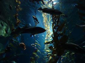 Ripley's Aquarium of Canada zeigt in Toronto heimische und exotische Fischarten.