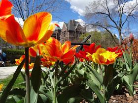 Der Frühling zeigt sich auch in Torontos Queen's Park.