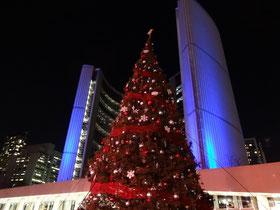 Der Weihnachtsbaum vor Torontos Rathaus  steht bereit.