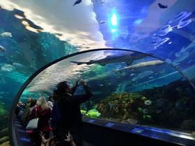 Beeindruckend: Der Tunnel durch Ripley's Aquarium of Canada in Toronto.