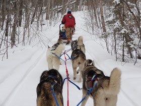 Schlittenhunde in Aktion: Sibirische Huskies in Ontario.