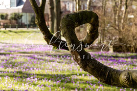 beachtenswert fotografie, Fotokunst, Nordfriesland,  Baum, Schlosspark, Husum