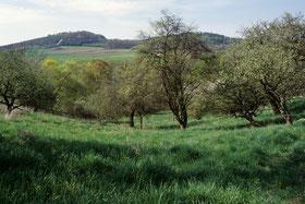 Extensive Kulturlandschaft umgibt die kleine Wildnis - die Streuobstwiesen des Hambachgrundes. (c) Hans Schönecker