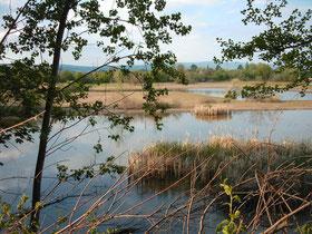 NABU-Schutzgebiet Hinter der Mortkaute (2004)