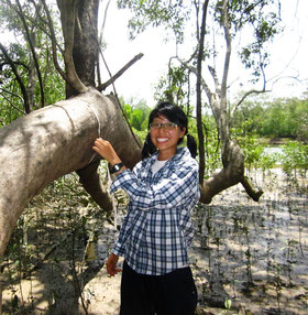 Measuring girth of mangrove trees at Ranong