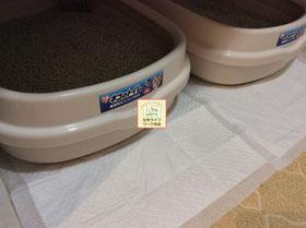 大阪兵庫で家事代行サービスはお掃除上手で快適な暮らしをご提案ペットの清掃AFTER