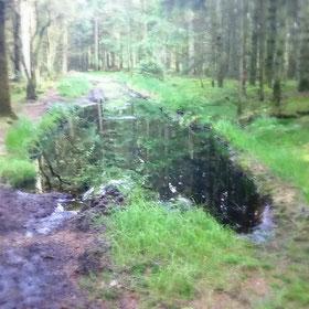 Mancher Waldweg gleicht kleinen Tümpeln