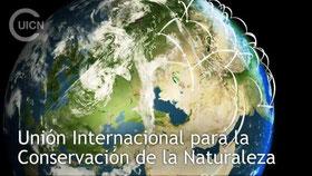 Foto: UICN, trabajamos en más de 160 países por las conservación