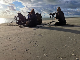 Guide Baie de Somme observation phoques traversée de la Baie activité aventure animaux à faire à voir à visiter à pied
