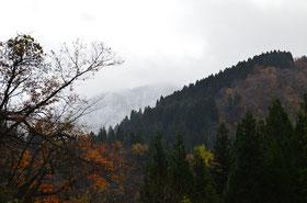 11月中旬には小原林道に初積雪を確認しました