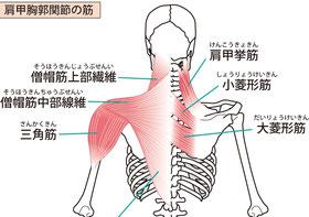 肩こり ・肩甲骨内側痛・四十肩は頭蓋骨、アゴ、腕、踵のねじれから