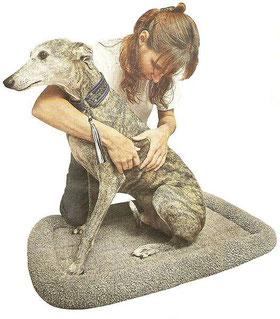 physiotherapie chien