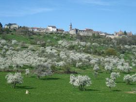 Village d'Hattonchatel et mirabelliers en fleurs Meuse Lorraine