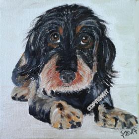Hundeporträt: Dackel, schwarz-braun, liegend. Hund schaut Betrachter an