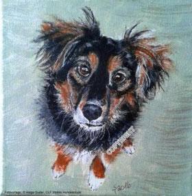 Hundeporträt: kleiner braun-schwarzer Hund sitzt und schaut Betrachter an