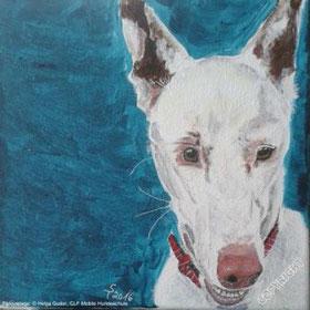 Hundeporträt: Galgomix, weiß, Kopfporträt mit leicht geöffnetem Maul und rosa Nase