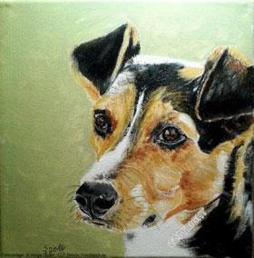 Hundeporträt: Kopf eines kleinen Hundes mit braun-weißer und schwarzer Fellfarbe.