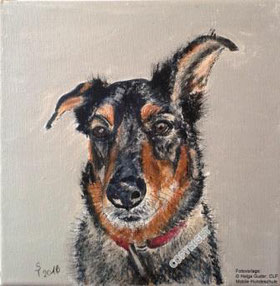 Hundeporträt: Mix braun-schwarz, Kopfporträt, schaut Betrachter an
