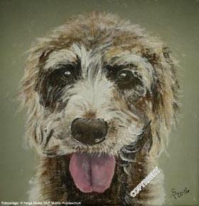 Hundeporträt: Kopf von braunem Mix mit heraushängender Zunge und brauner Nase sowie braunen Augen