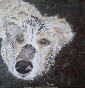 Hundeporträt: Golden Retriever (Kopf) mit Schlamm auf dem Kopf schaut leicht nach oben zum Betrachter