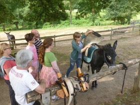 la préparation de l'âne avant la randonnée