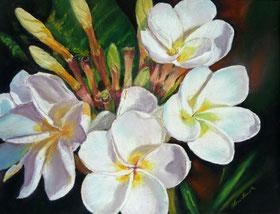 Plumeria, Blumen aus Hawaii
