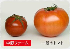 一般のトマトとの違い